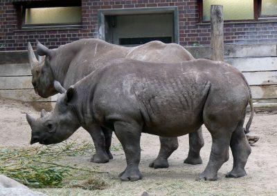 Nashörner-Zoo-Berlin-26.06.2020