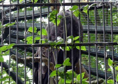 Seeadler-Zoo-Berlin-26.06.2020